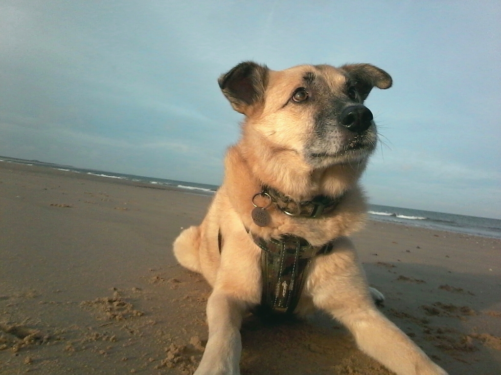 Louie_on_the_beach